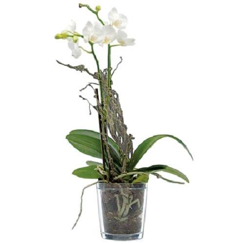 sandra rich orchideentopf klar 12 5 cm blumentopf. Black Bedroom Furniture Sets. Home Design Ideas